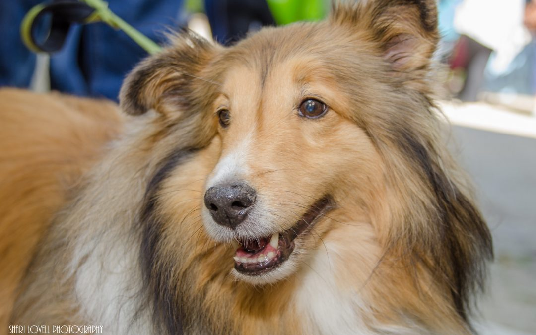 Vegfest Guelph is a dog-friendly event